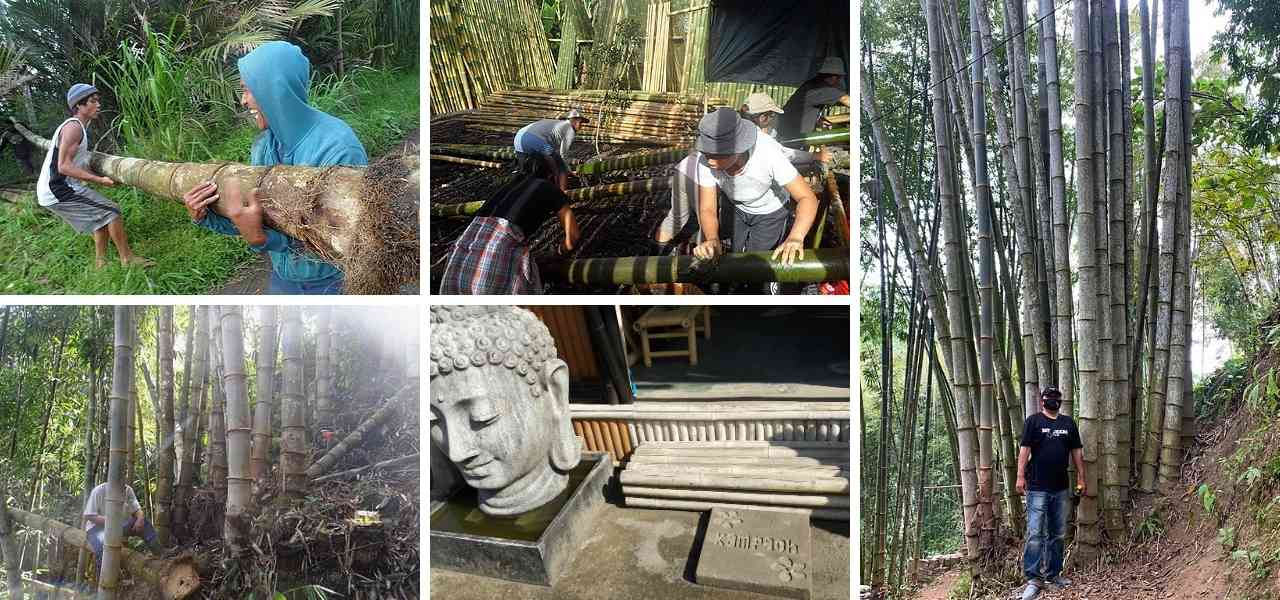 Bambú Bali