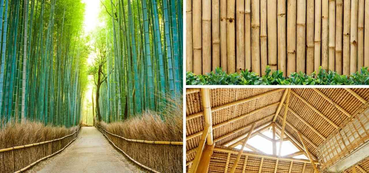 beneficios bambú