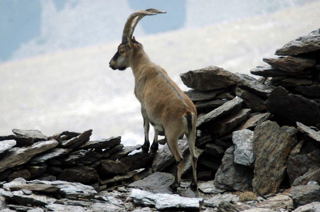 Fauna del Parque Nacional de Sierra Nevada